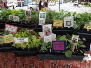 Sooke Country Market @ Otter Point Road at Eustace Road